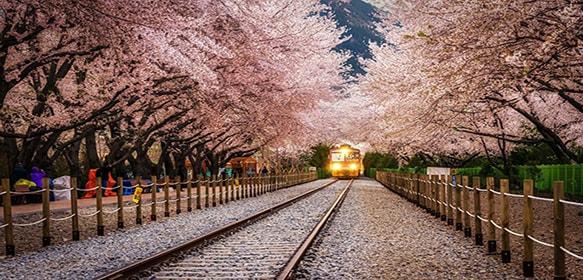 jalan-jalan tour korea